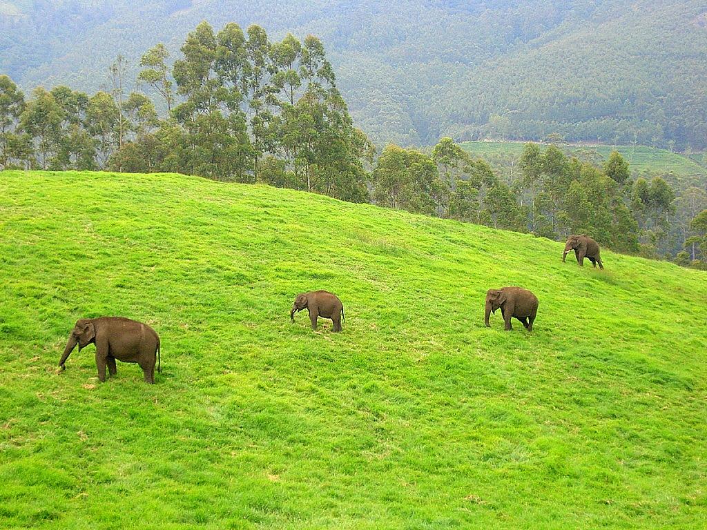 Inde Elephants Ulyces