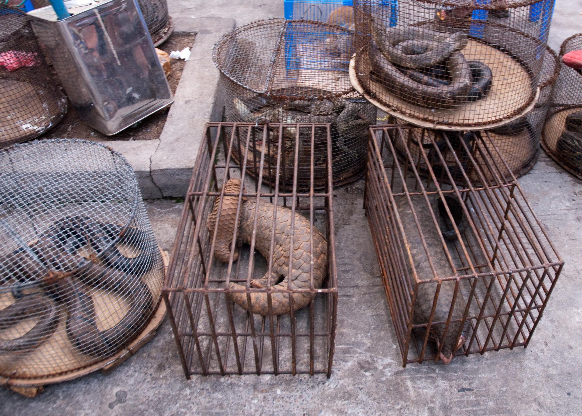 Birmanie vice Ulyces